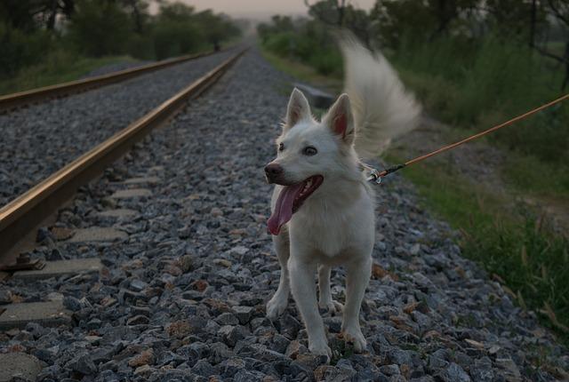 Cestujeme vlakom, so zvieraťom